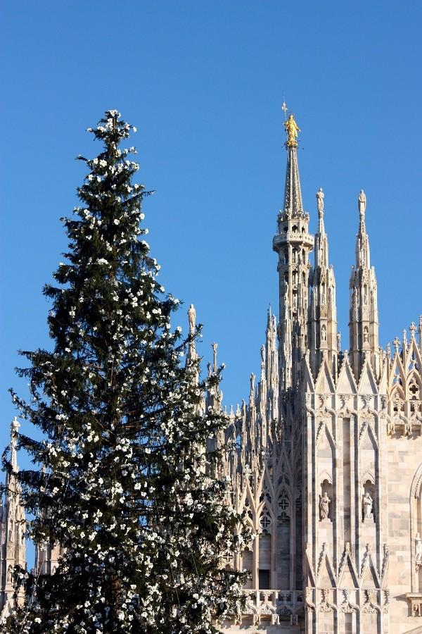 Milaan-Duomo-kerstboom