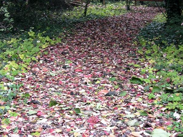 Mincio-herfst