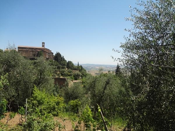 Montalcino-tuin (2)