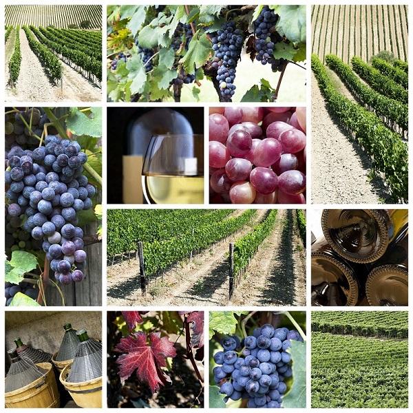 Montalcino-wijn (1)