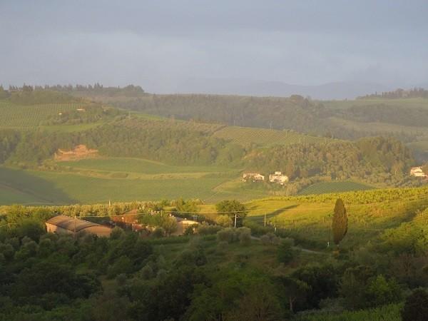 Montespertoli-Toscane (3)