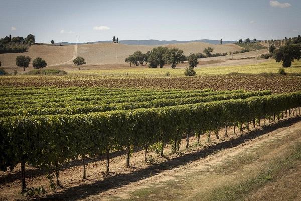 My-Tuscan-Experience-Around