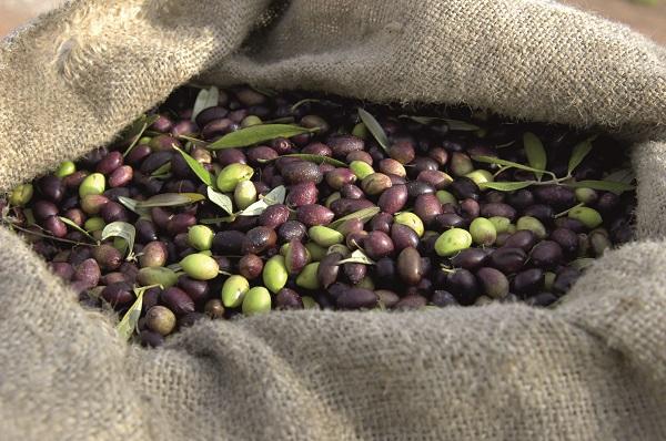 Novello-olijfolie-extra-vergine-Oil-Vinegar (3)