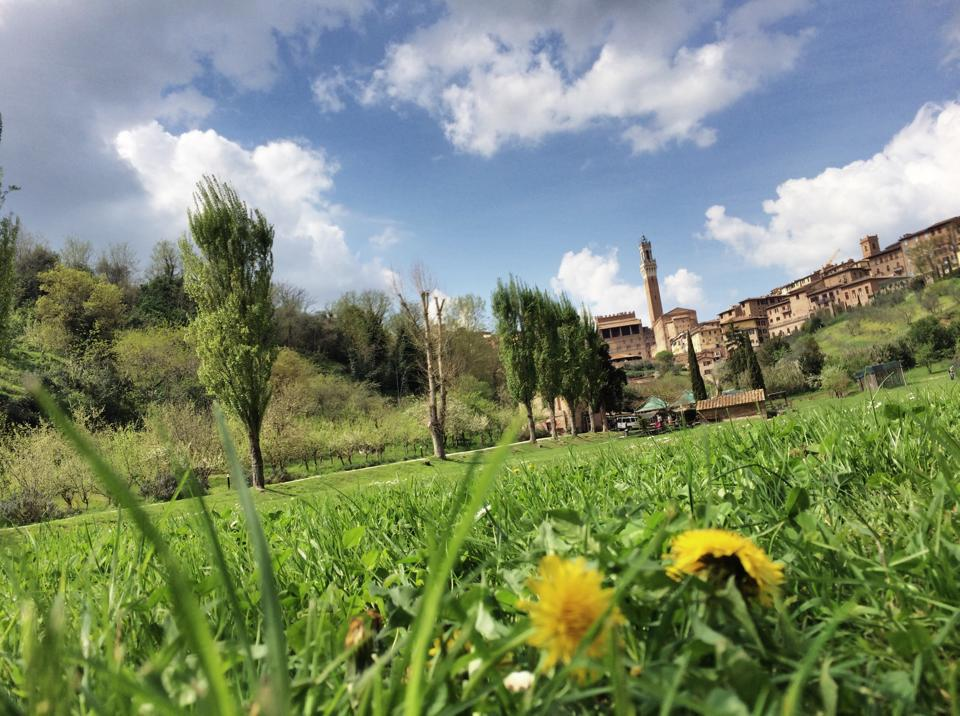 Orto-Pecci