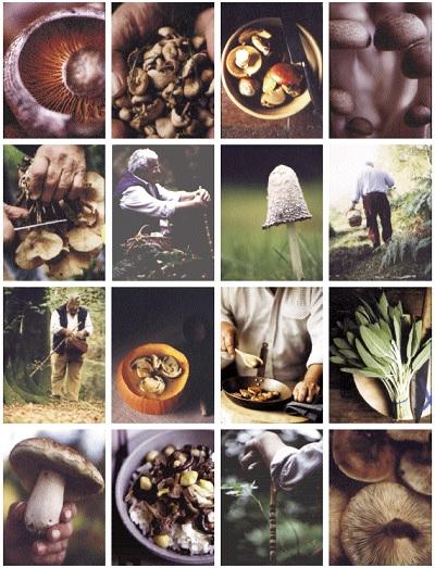 Paddestoelen_uit_de_keuken_van_Carluccio-collage