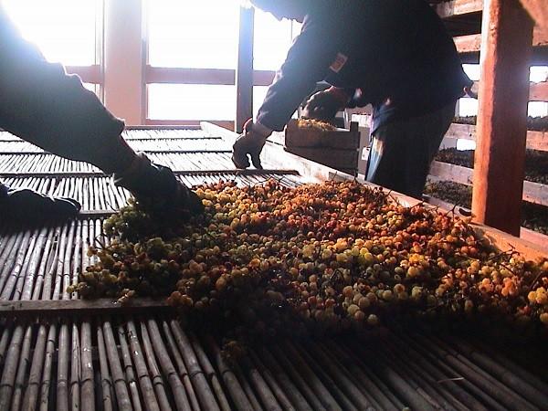 Pieropan-wijn-Soave (3)