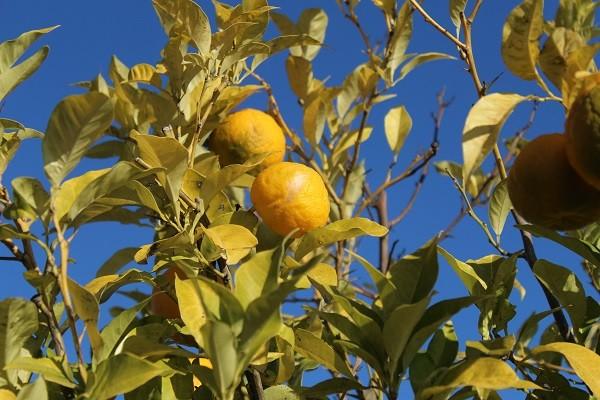 Pistoia-green-Giardino-pensile (4)