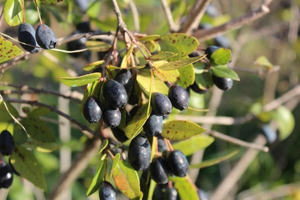 Pistoia-green-Giardino-pensile (5)