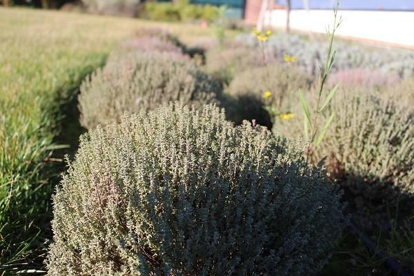 Pistoia-green-Giardino-pensile (6)