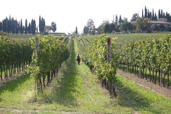 Podere-Selva-Capuzza-Gardameer-wijn (2)