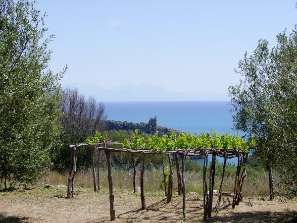 foto 6 wijnstok