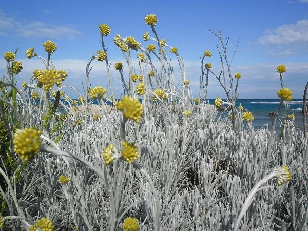 Puglia-bloemen-Anne-Keizer (1)