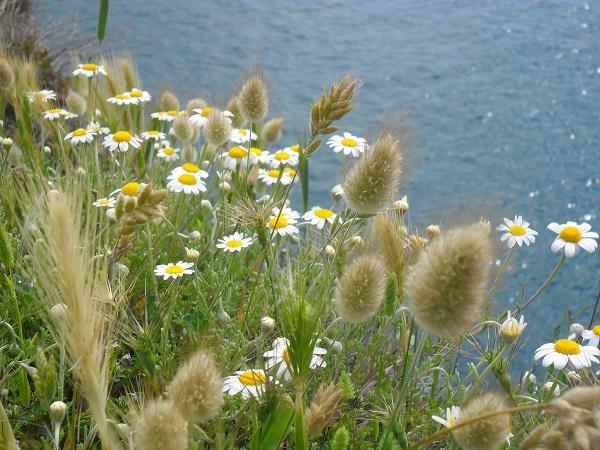 Puglia-bloemen-Anne-Keizer (2)