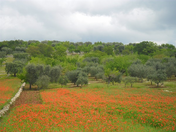 Puglia-bloemen-Anne-Keizer (3)
