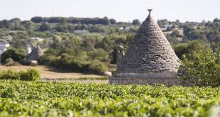 Puglia-trulli-wijn