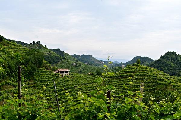 Rive-Vive-prosecco-wijngaarden-Veneto-feest-wandelen (12)