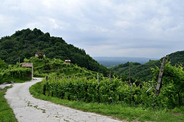 Rive-Vive-prosecco-wijngaarden-Veneto-feest-wandelen (19)