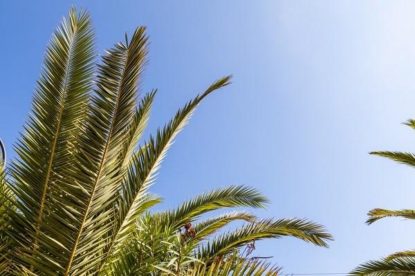 Riviera-delle-Palme-San-Benedetto-al-Tronto-Le-Marche (1)