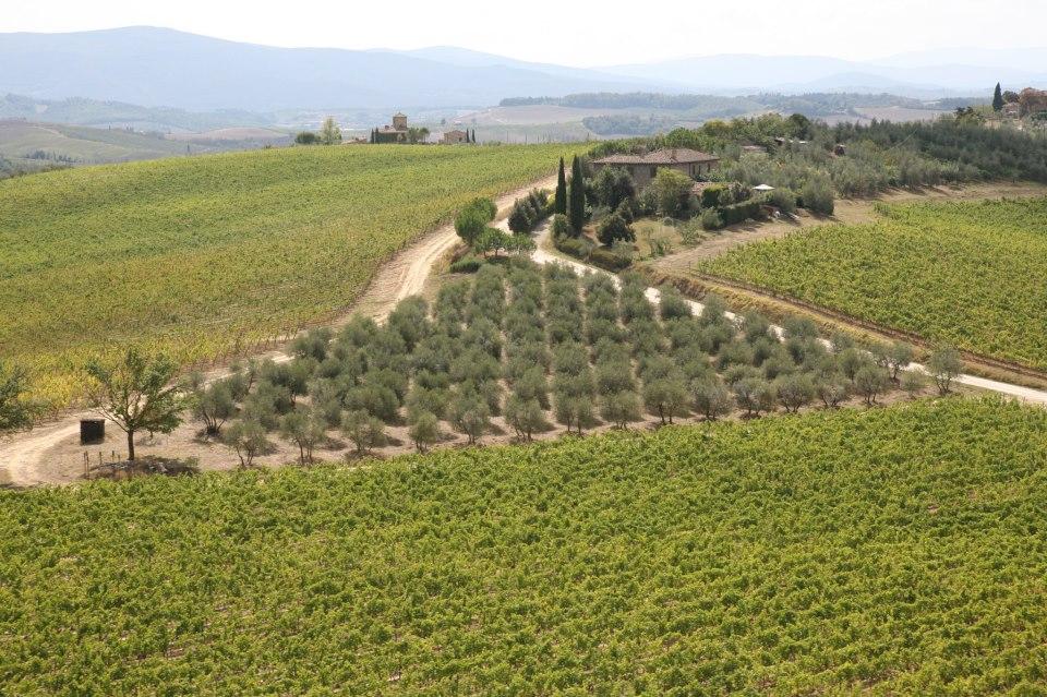 Ruffino-wijngaard