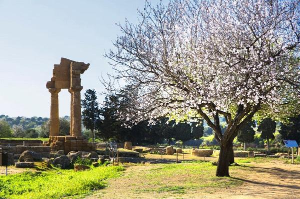 Sicilie-bloesem-Agrigento-tempel