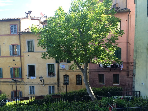 Siena-contrada-Bruco (1)