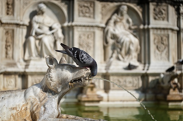 Siena-fontein-Piazza-Campo