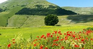 Umbrië-Piano-Grande-fioritura