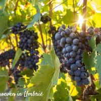 Umbrië-het-groene-hart-van-Italië-reisgids-11