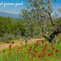 Umbrië-het-groene-hart-van-Italië-reisgids-14