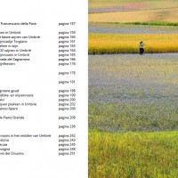 Umbrië-het-groene-hart-van-Italië-reisgids-4