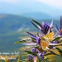 Umbrië-het-groene-hart-van-Italië-reisgids-9