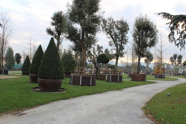 Vannucci-Piante-Pistoia (2)