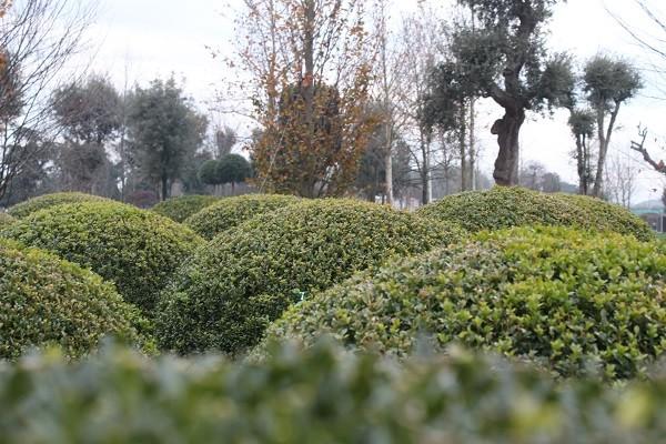 Vannucci-Piante-Pistoia (4)