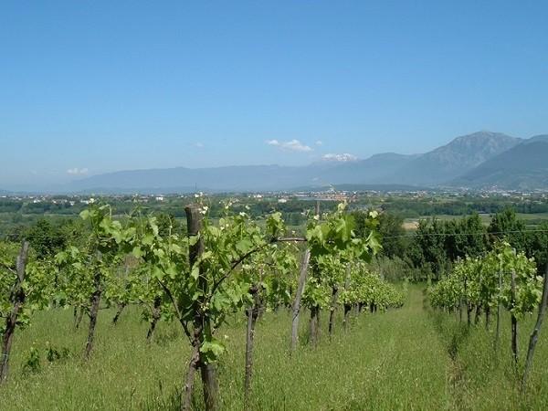 Vigne-Storte-Campanie