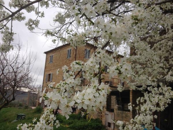 Villa-Moltini-Le-Marche (16)