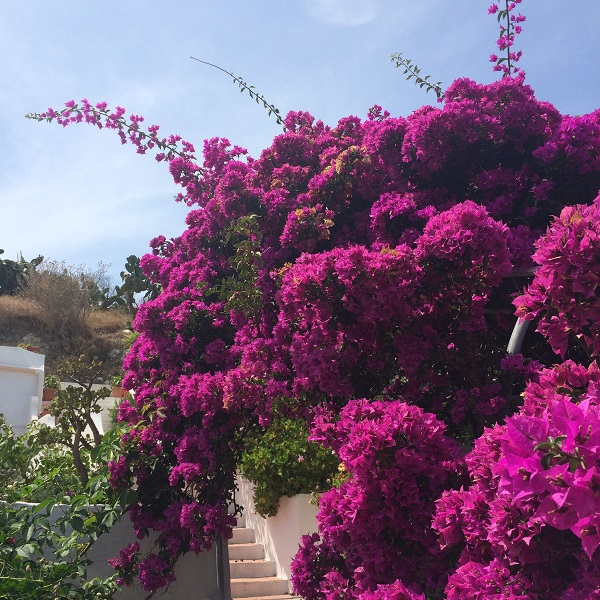 Villa-al-Faro-Visit-Ponza (5)