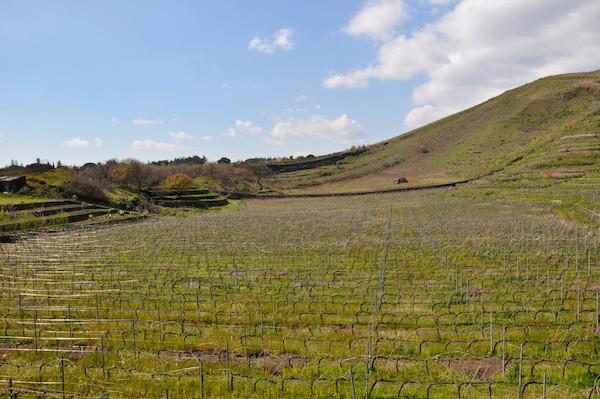 Wijnbouw-Etna