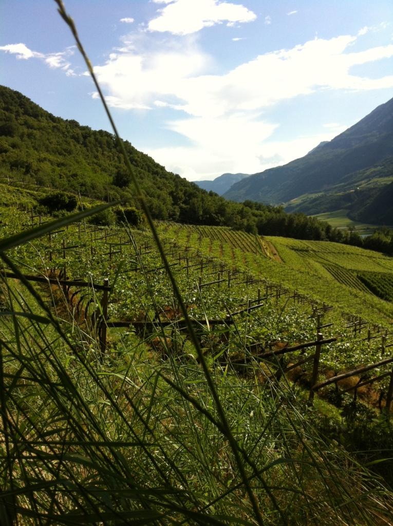 Zuid-Tirol 092