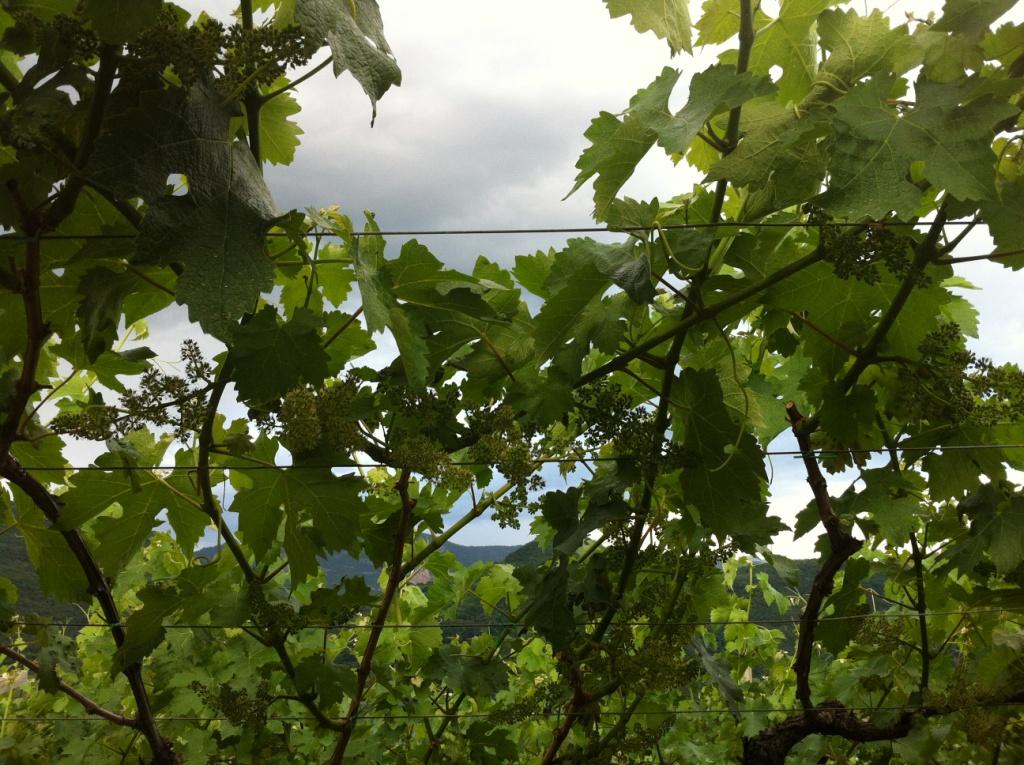 Zuid-Tirol 099