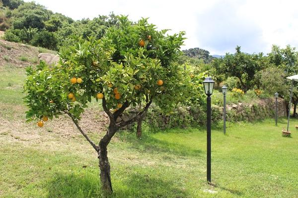 agriturismo-Villa-Rica-Sicilie (6)