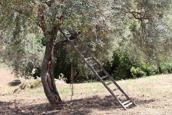 agriturismo-Villa-Rica-Sicilie (8)