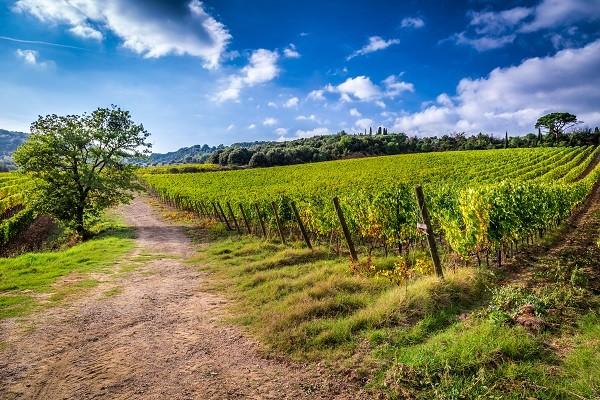 agriturismo-vakantie-boerderij-Italie (2)