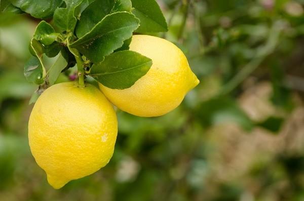 citroenen-Gardameer (1)