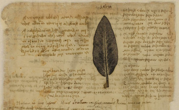 codex-2