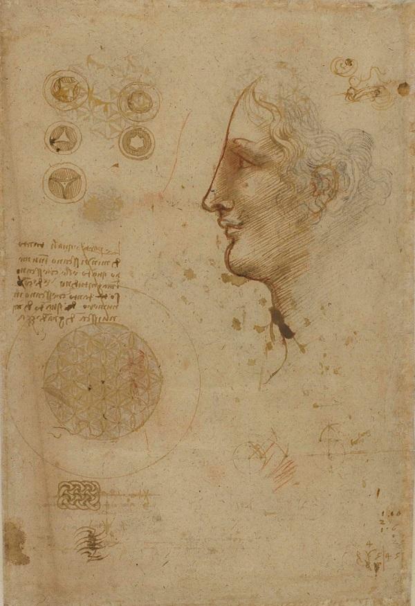 codex-6