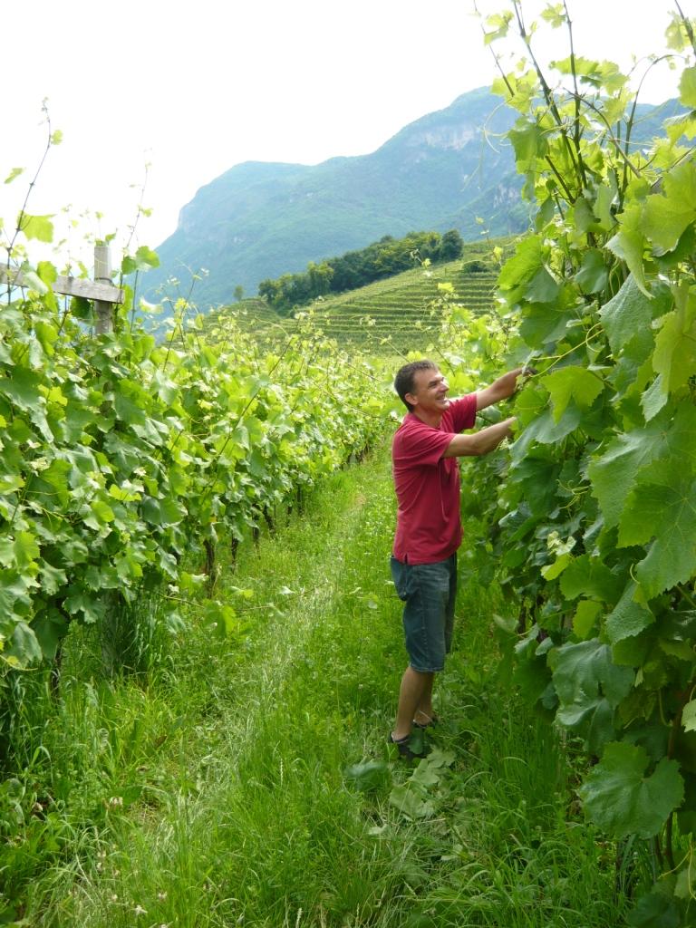 druiven-Zuid-Tirol