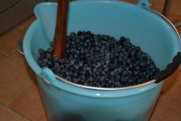 druivenoogst-Umbrie