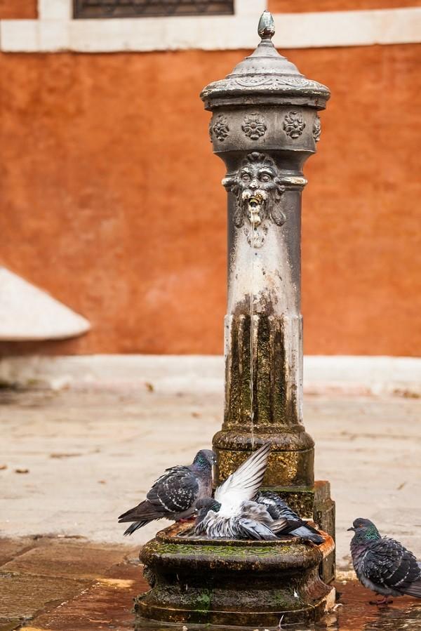 duiven-Venetië