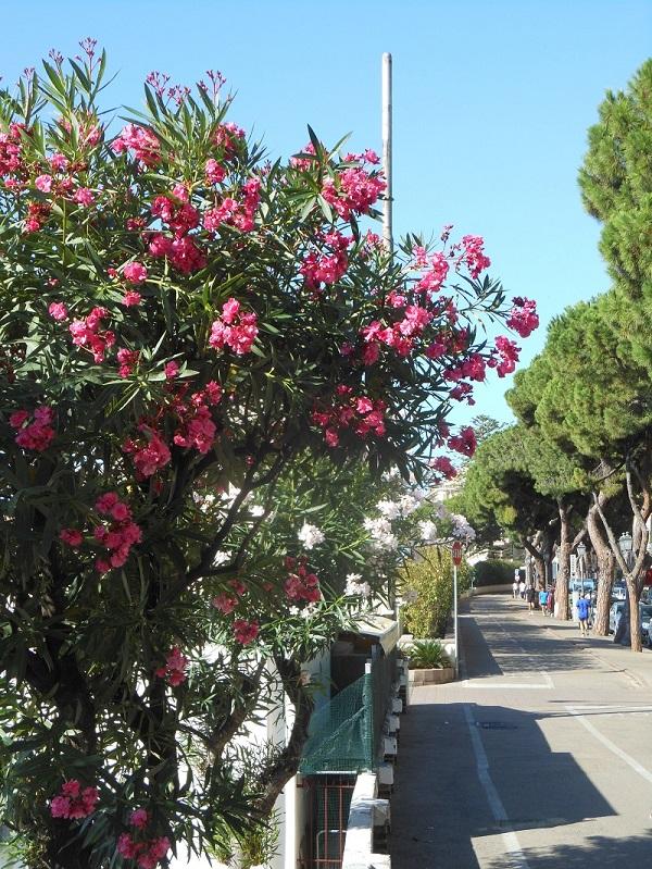 fietspad-Sanremo-Ligurië-kust (13)