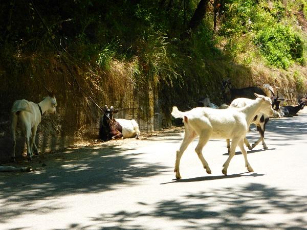 geiten-Garfagnana (1)